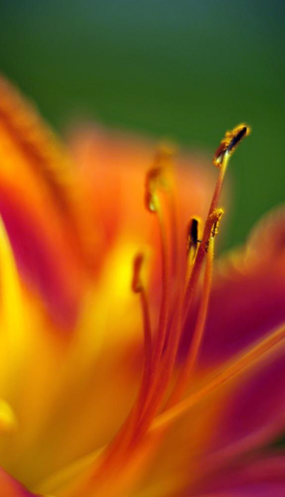 Pistil fleur consultations Muriel Gadin